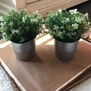 Set of 2 IKEA plants